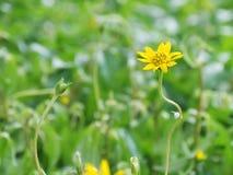Gelbe Blumen in der Garten Gefühls-Auffrischung stockfotografie