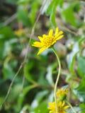 Gelbe Blumen in der Garten Gefühls-Auffrischung lizenzfreies stockfoto