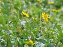 Gelbe Blumen in der Garten Gefühls-Auffrischung stockbilder