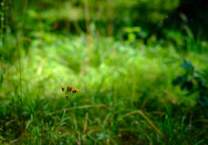 Gelbe Blumen in der Sonne Lizenzfreie Stockfotos