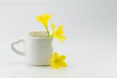 Gelbe Blumen in der weißen Schale auf weißem Hintergrund Lizenzfreies Stockbild