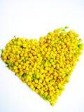 Gelbe Blumen des Hintergrundes Stockfotografie