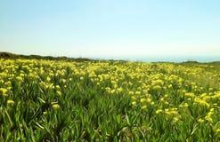 Gelbe Blumen, die gegen einen klaren blauen Himmel blühen Stockbilder