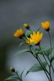 Gelbe Blumen durch den Fluss Stockfoto