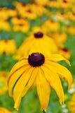 Gelbe Blumen an einem vollen Tag lizenzfreie stockfotografie