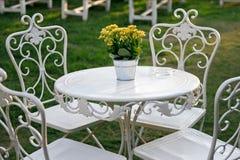 Gelbe Blumen in einer Wanne auf einer weißen Tabelle Lizenzfreies Stockfoto