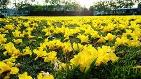 Gelbe Blumen fallen weg vom Boden Lizenzfreie Stockbilder