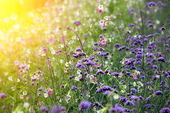 Gelbe Blumen gegen blauen Himmel Lizenzfreie Stockfotografie