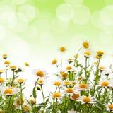 Gelbe Blumen gegen blauen Himmel stockfoto