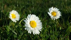 Gelbe Blumen gegen blauen Himmel Lizenzfreies Stockfoto