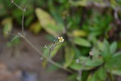 Gelbe Blumen gegen blauen Himmel stockfotografie