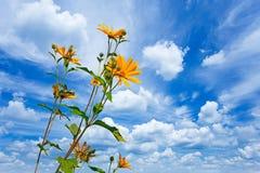 Gelbe Blumen gegen cloudscape lizenzfreie stockbilder