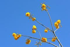Gelbe Blumen im blauen Himmel Stockfoto