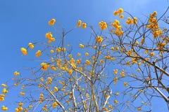 Gelbe Blumen im blauen Himmel Stockfotografie