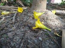 Gelbe Blumen im Boden Stockfoto