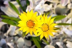 Gelbe Blumen im Garten Lizenzfreie Stockbilder