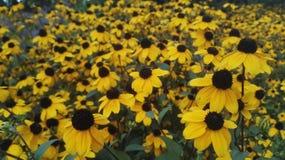 Gelbe Blumen im Garten Stockbild