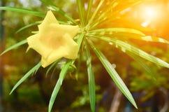 Gelbe Blumen im Park stockbild