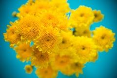 Gelbe Blumen ist frisch Stockfoto