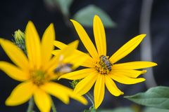 Gelbe Blumen mit Bienen Stockbild
