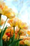 Gelbe Blumen mit blauem Himmel Stockbild