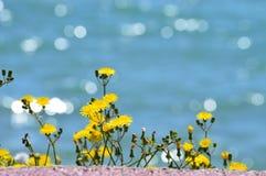 Gelbe Blumen mit bokeh Seehintergrund Stockbilder