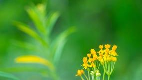 Gelbe Blumen mit Defocused grünem Hintergrund Stockfotos