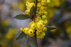Gelbe Blumen mit Grün und den Dornen Stockfotografie