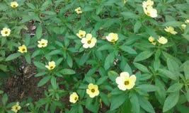 Gelbe Blumen mit grünen Blättern stockbild