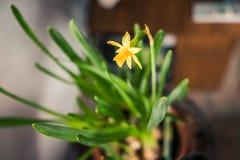 Gelbe Blumen mit grünen Blättern lizenzfreies stockfoto