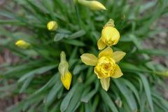 Gelbe Blumen mit grünen Blättern lizenzfreie stockfotografie