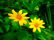 Gelbe Blumen mit grünen Blättern Stockbilder