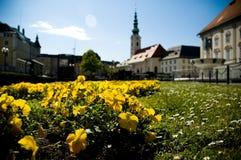 Gelbe Blumen mit Kirche Stockbild