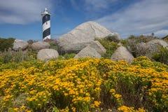 Gelbe Blumen mit Leuchtturm im Hintergrund Stockbilder