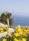 Gelbe Blumen mit palmtree Stockbilder