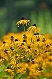 Gelbe Blumen nach dem Regen Stockbild