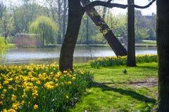 Gelbe Blumen nahe einem See Stockbilder
