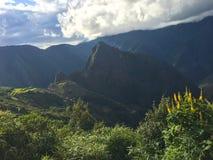 Gelbe Blumen nahe Machu Picchu Lizenzfreies Stockbild