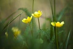 Gelbe Blumen schließen oben stockfoto