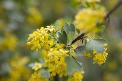 Gelbe Blumen schließen oben lizenzfreies stockbild