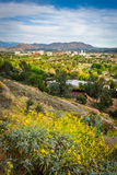 Gelbe Blumen und Ansicht von entfernten Bergen und von Flussufer Lizenzfreie Stockfotos