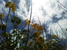 Gelbe Blumen und blauer Himmel stockbild