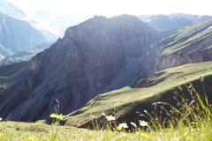 Gelbe Blumen und Gras im Vordergrund gegen die Hügel von Bergen und von Felsen Stockbild