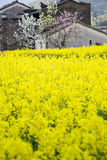 gelbe Blumen und Haus Lizenzfreies Stockfoto