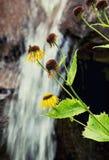 Gelbe Blumen und Wasserfall im Hintergrund Stockbild