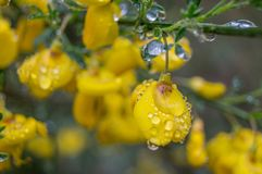 Gelbe Blumen unter dem Regen Stockfotos