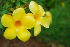 Gelbe Blumenblätter Lizenzfreie Stockfotografie