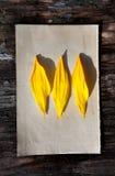 Gelbe Blumenblätter auf altem Papier Stockbilder