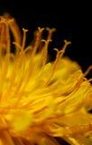 Gelbe Blumendetails lizenzfreie stockfotos