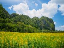Gelbe Blumenfelder mit Gebirgs- und des blauen Himmelshintergrund Stockfotografie